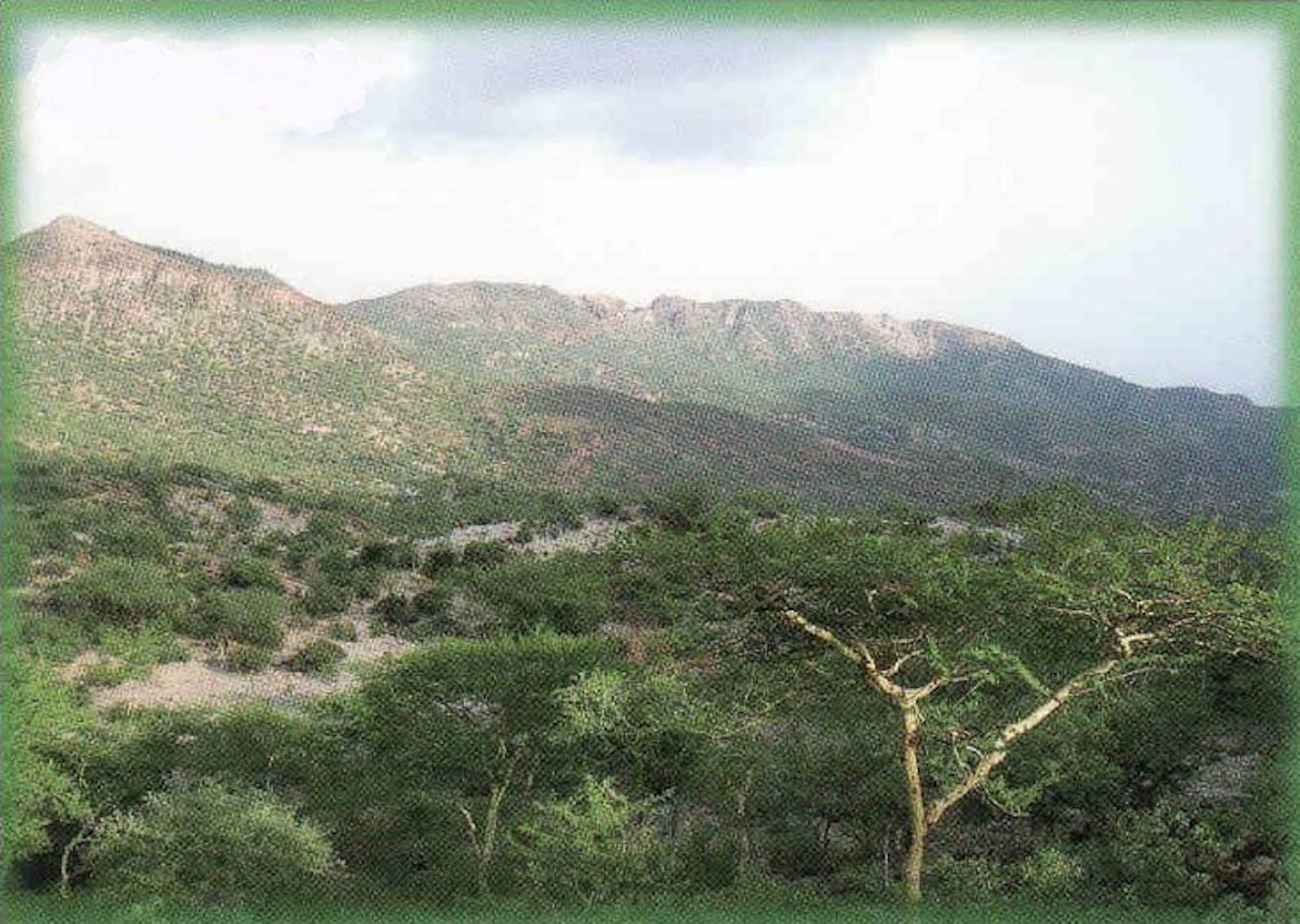 Eritrean Coastal Desert