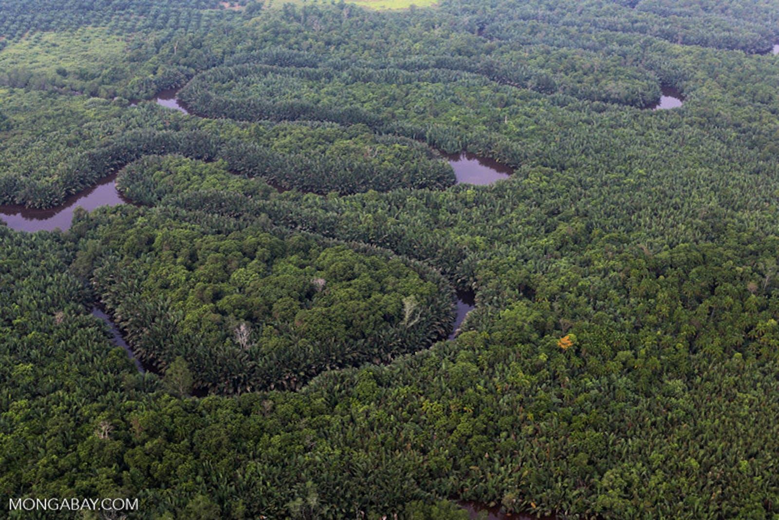 Sumatran Freshwater Swamp Forests