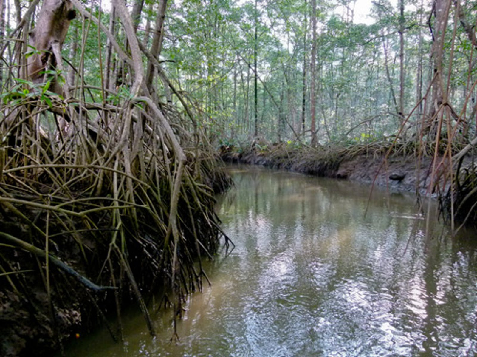 Southern Mesoamerican Pacific Mangroves
