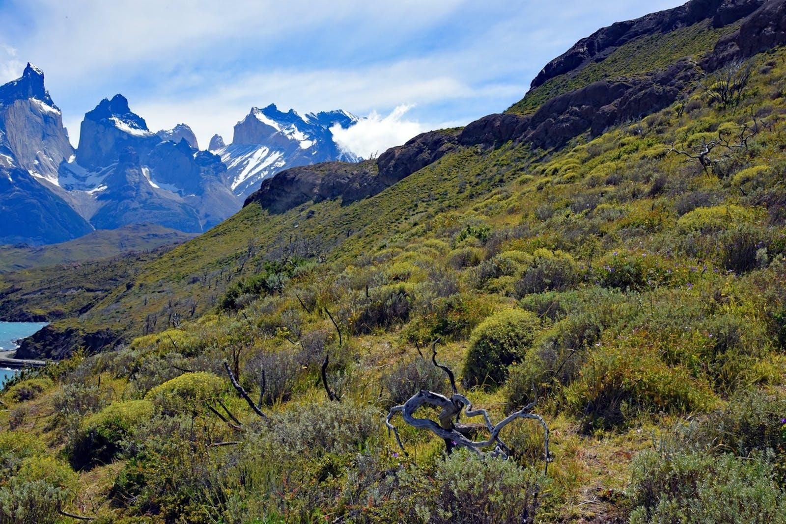 Magellanic Subpolar Forests