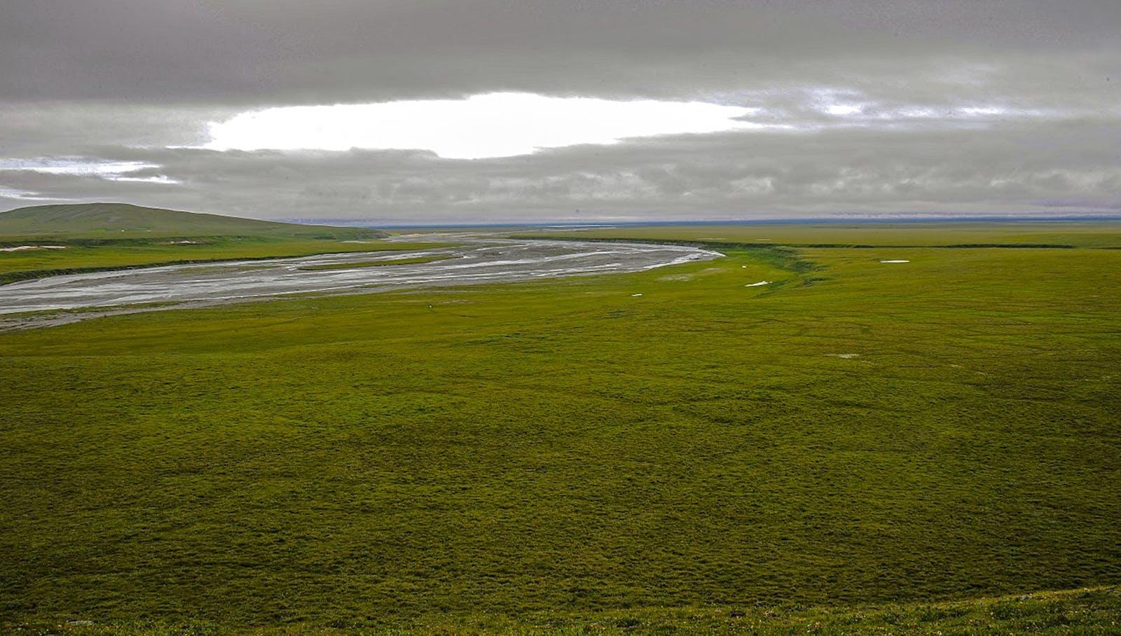 Arctic Coastal Tundra