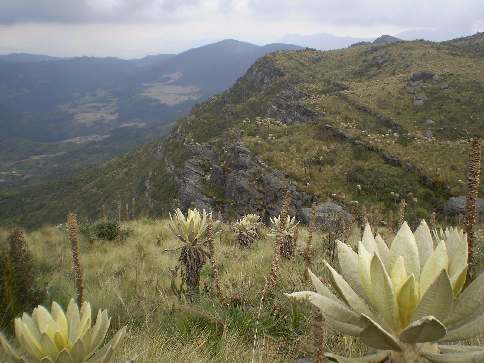 Northern Andean Páramo