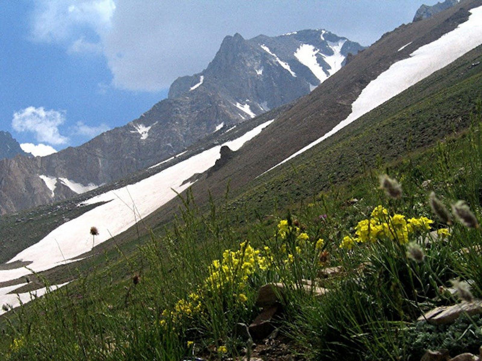 Elburz Range Forest Steppe