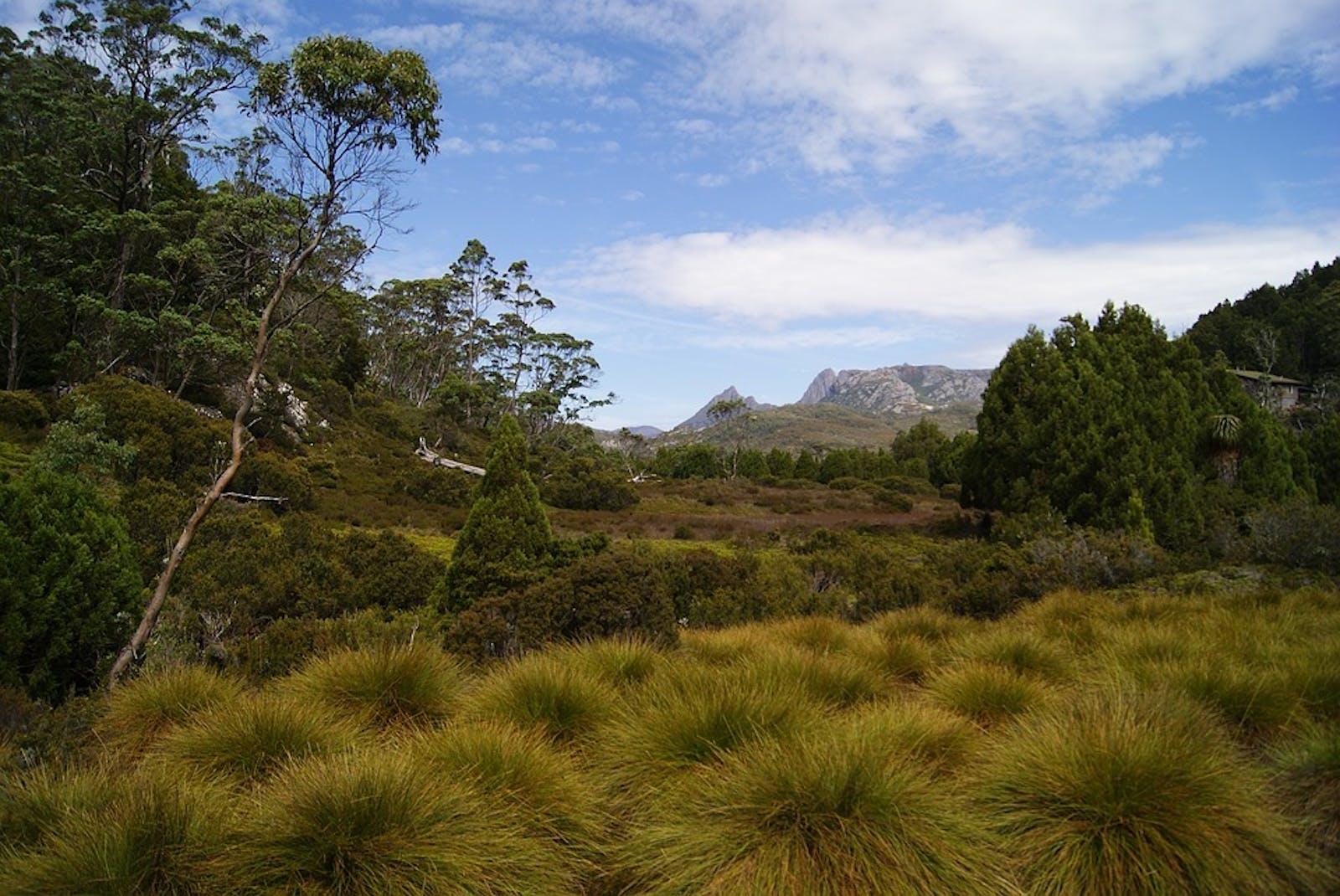 Tasmanian Central Highland Forests