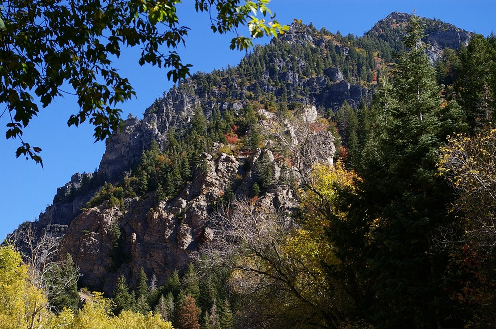 Wasatch and Uinta Montane Forests