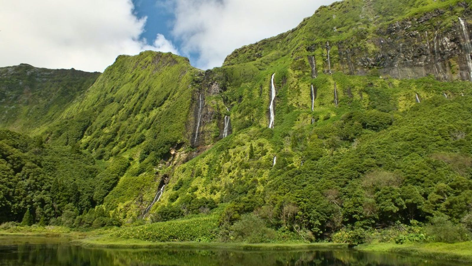 Azores Temperate Mixed Forests