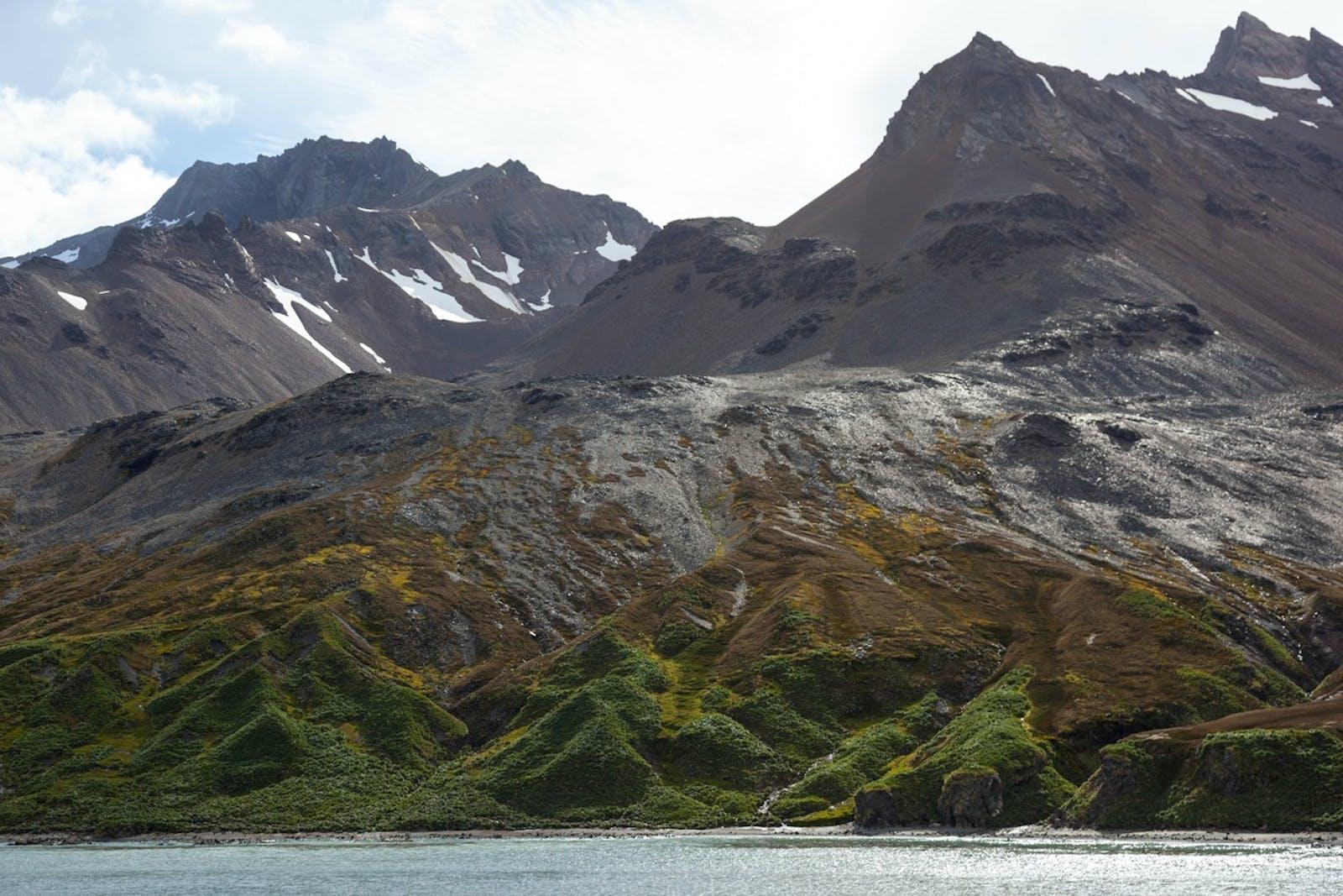 Scotia Sea Islands Tundra