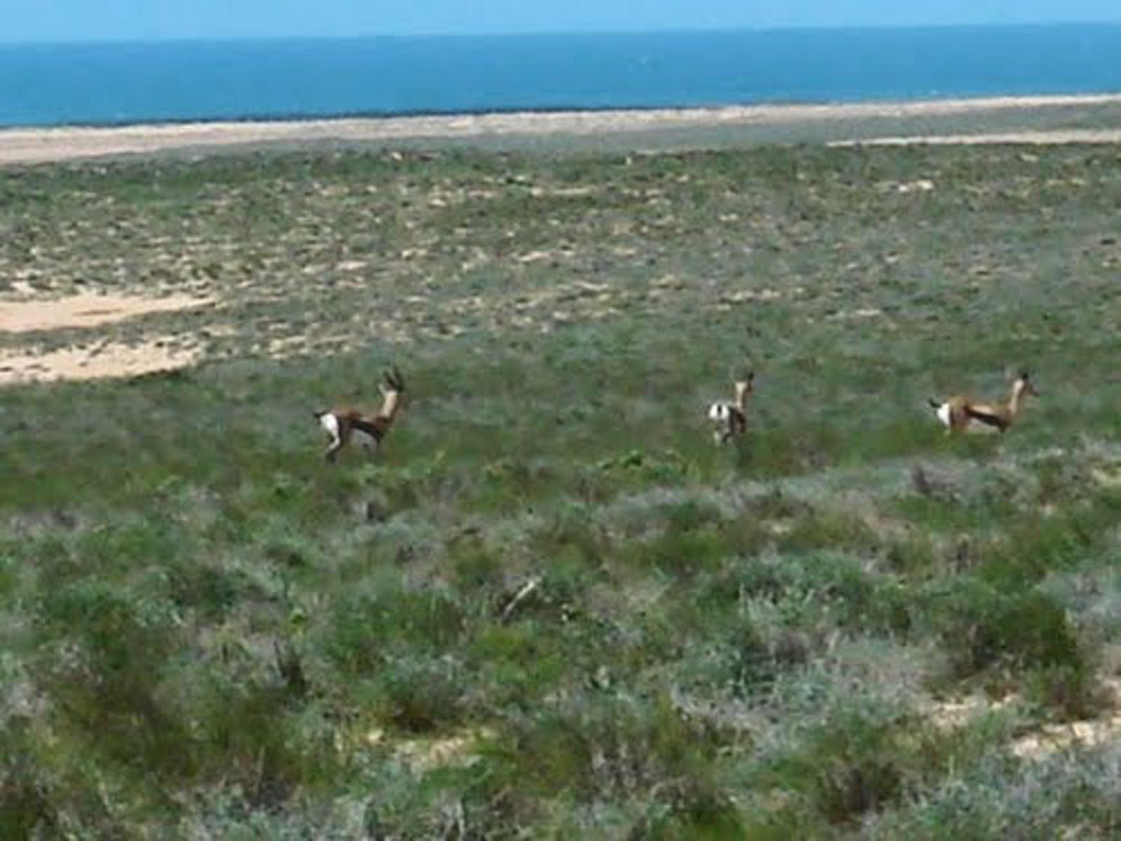 Hobyo Grasslands and Shrublands