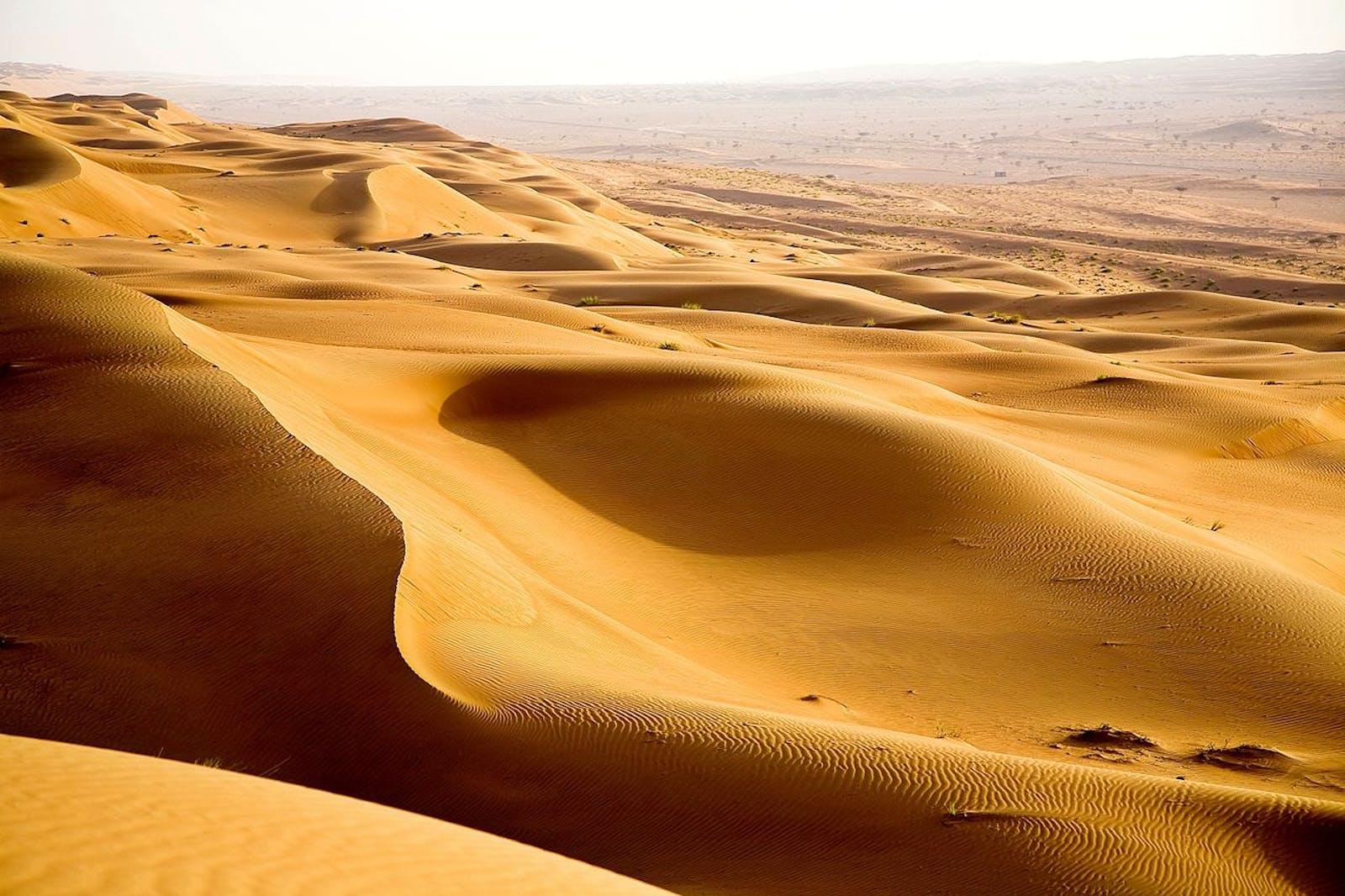 East Arabian Fog Shrublands and Sand Desert
