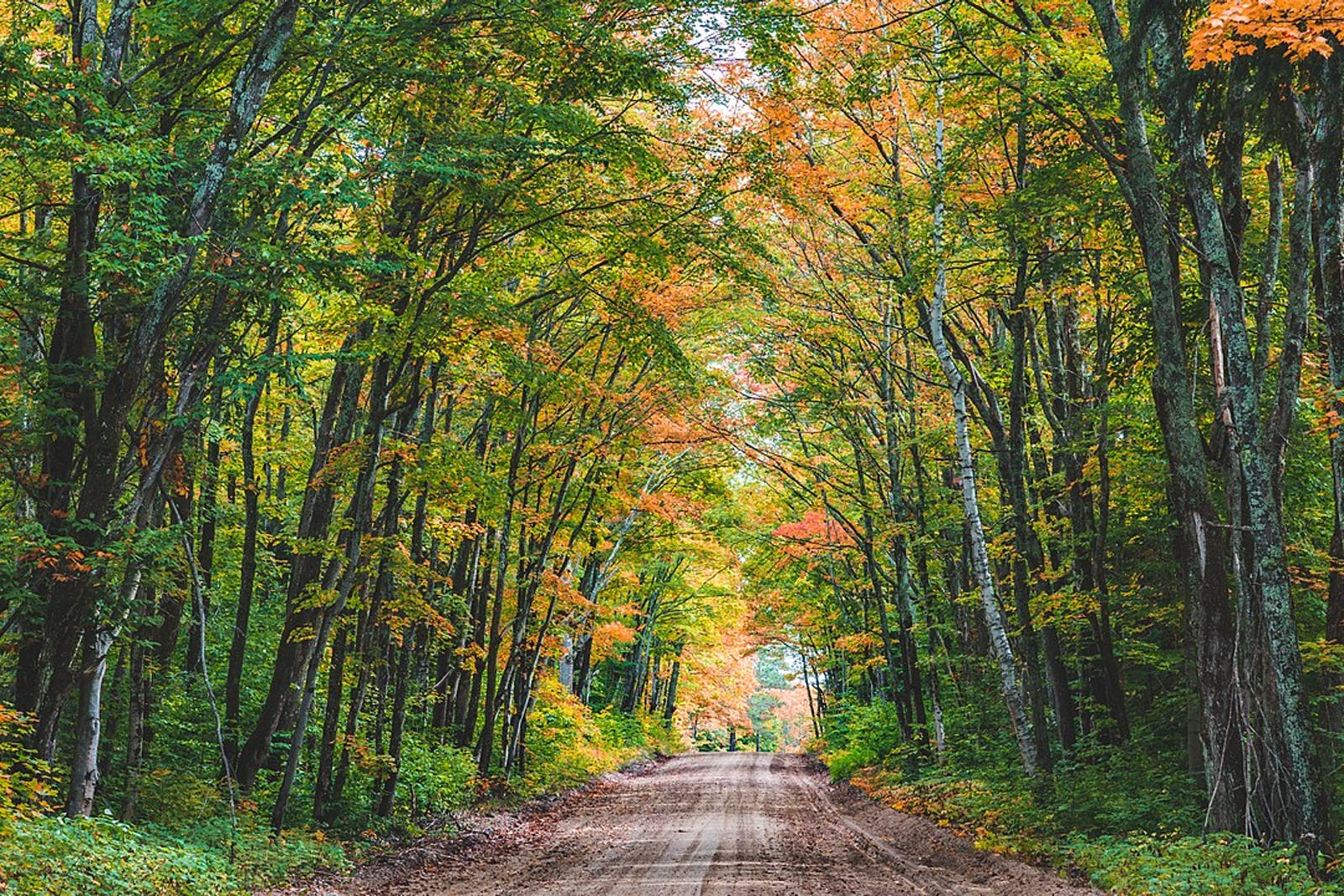 Western Great Lakes Forests