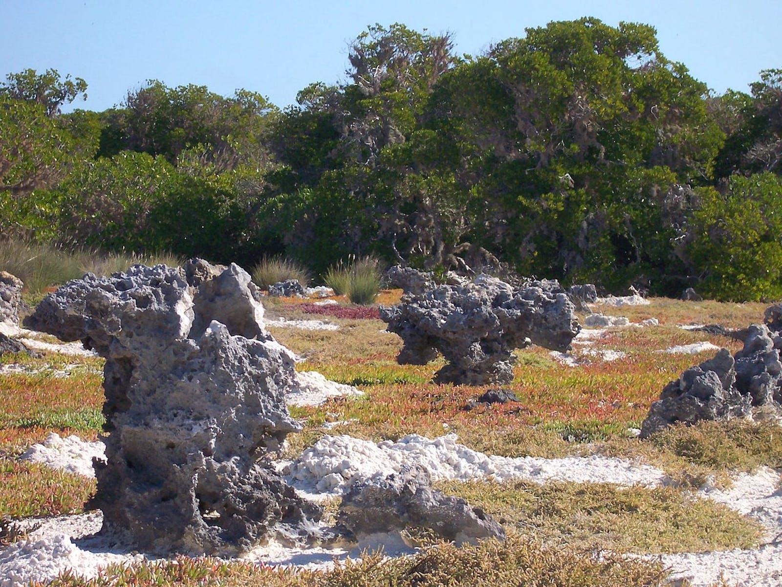 Aldabra Island Xeric Scrub