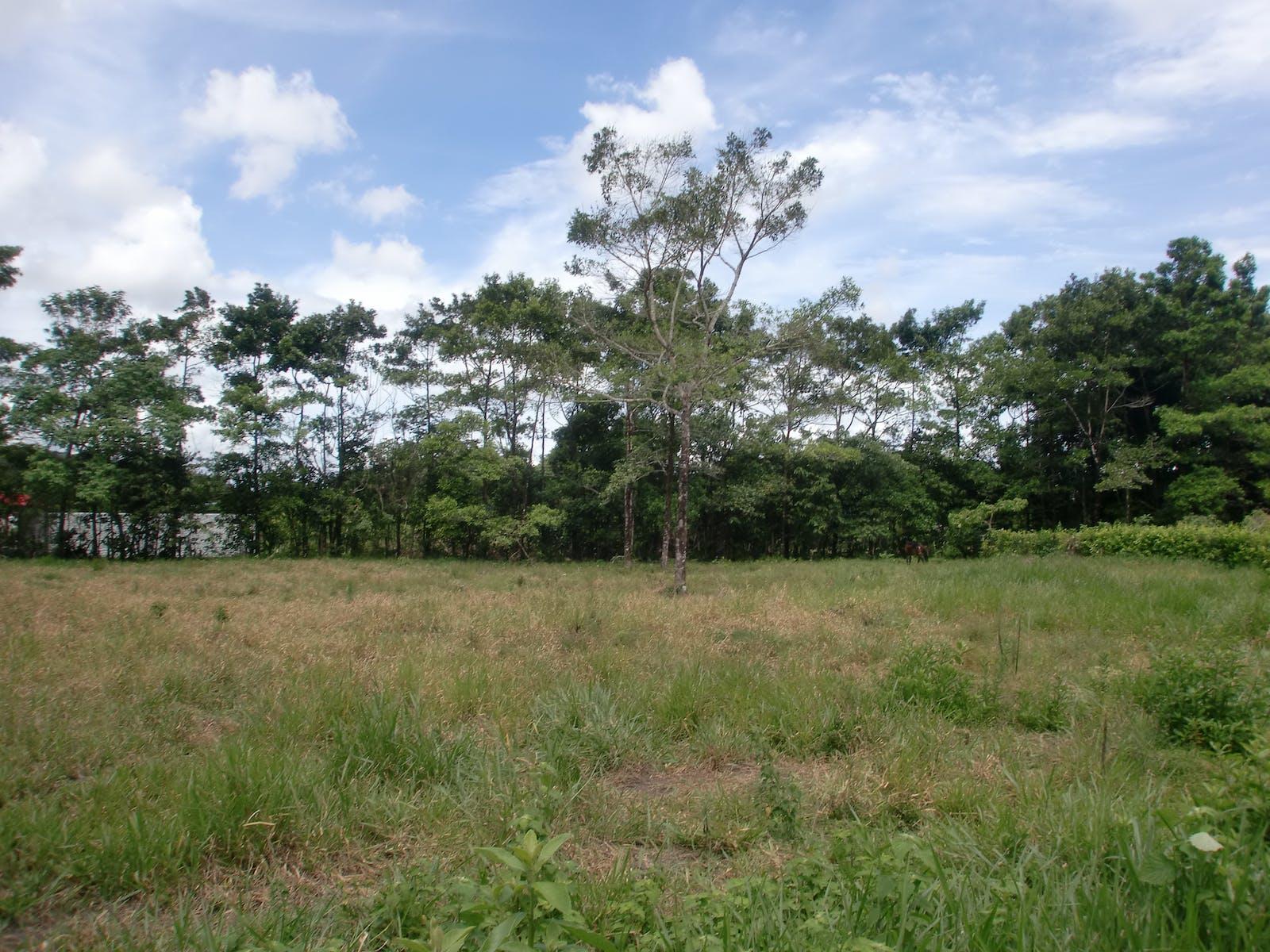 Apure-Villavicencio Dry Forests