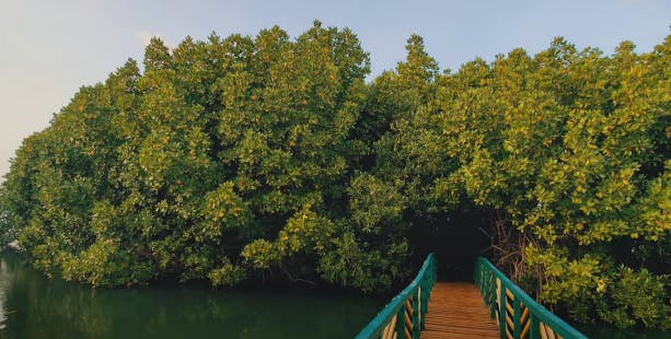 While damaged and developing regions of the mangroves are closed to the public, while mature regions are closely monitored, yet open to the public, like this one in Honnavar. Image credit: Courtesy of Ishita Yadav.