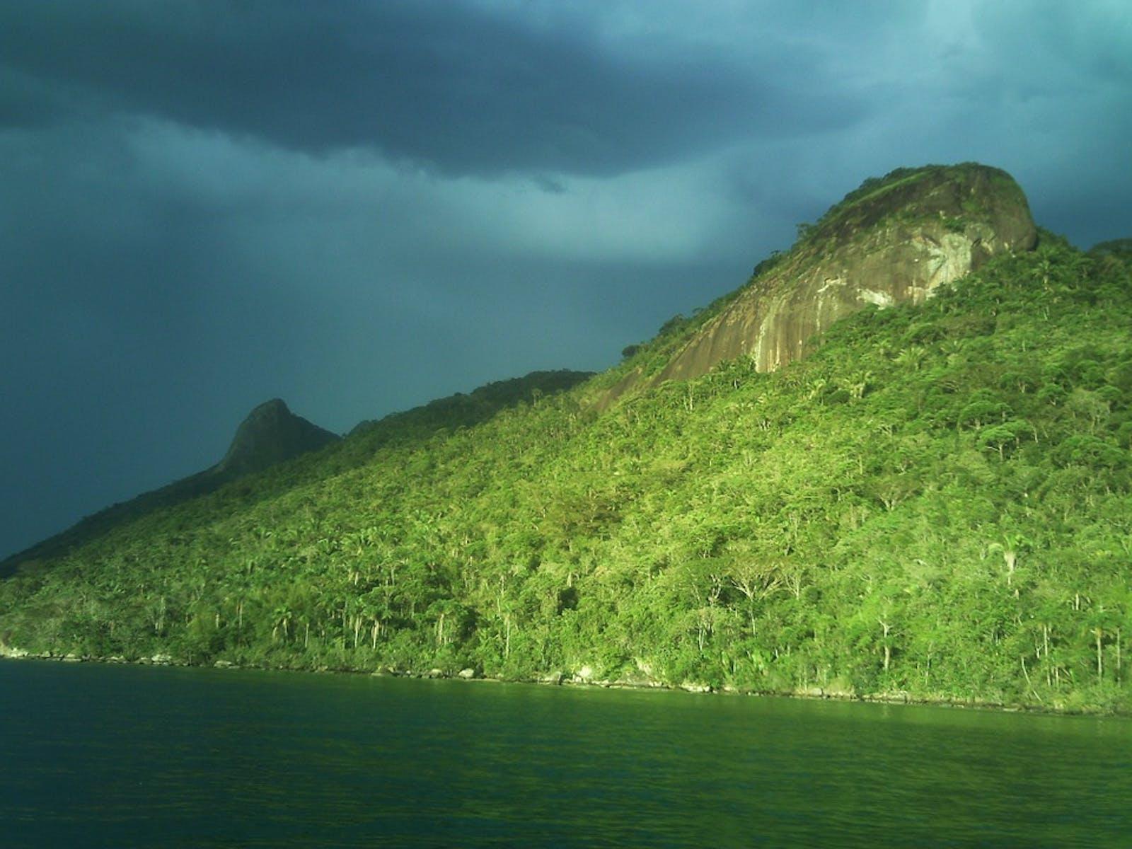 Serra Do Mar Coastal Forests