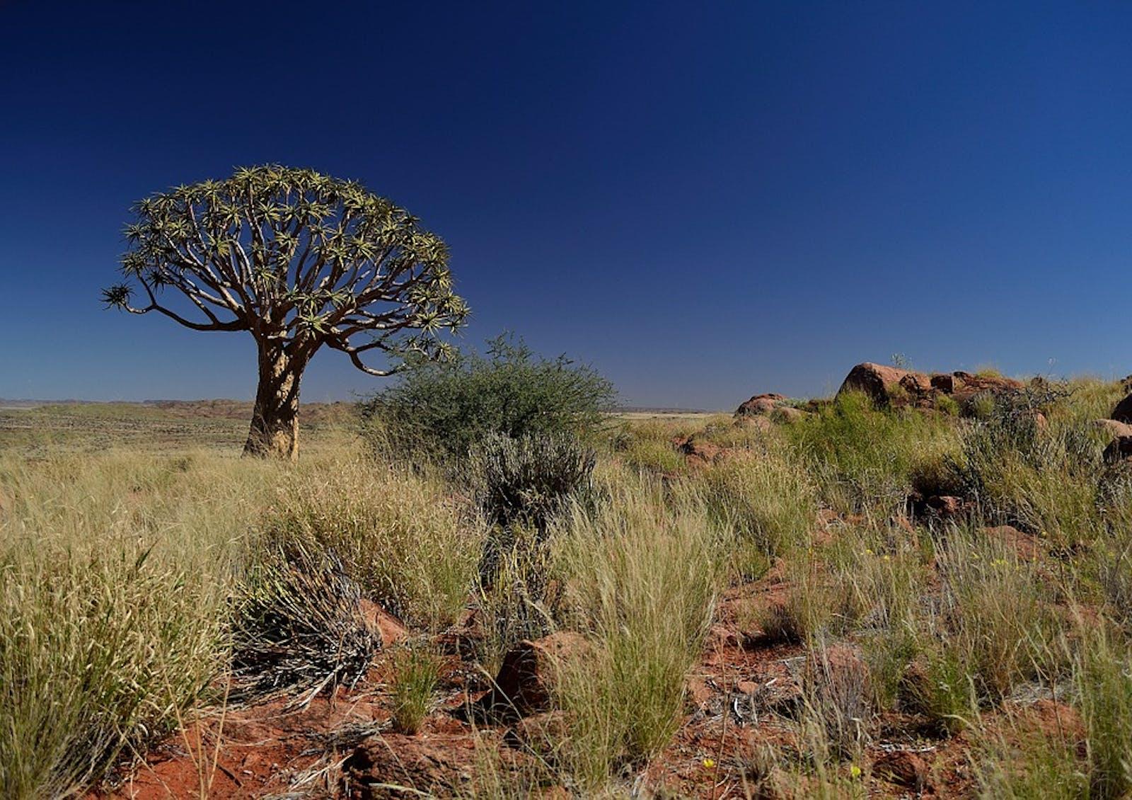 Kalahari Xeric Savanna