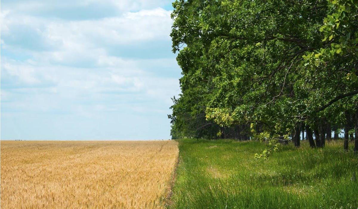 Regenerative Agriculture can play a key role in combating climate change