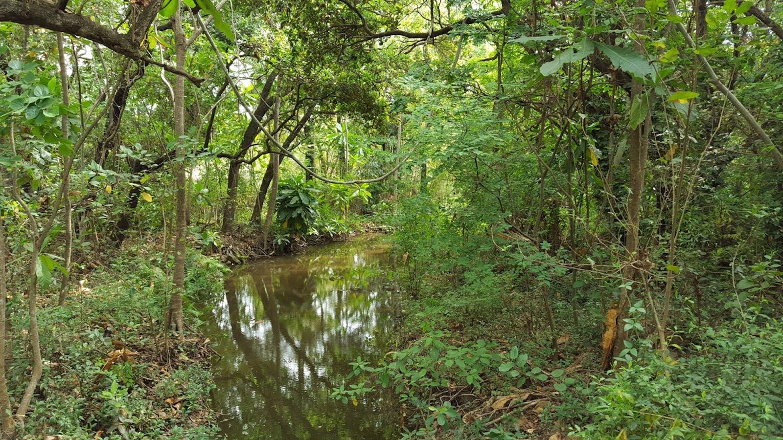 Kwazulu Natal-Cape Coastal Forests