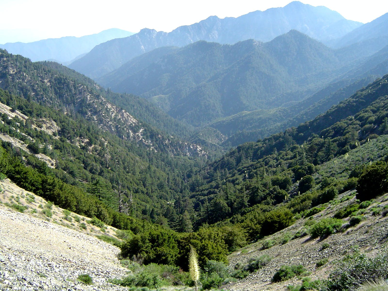 Santa Lucia Montane Chaparral and Woodlands