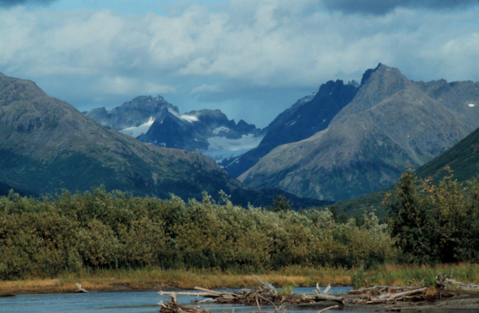 Beringia Upland Tundra