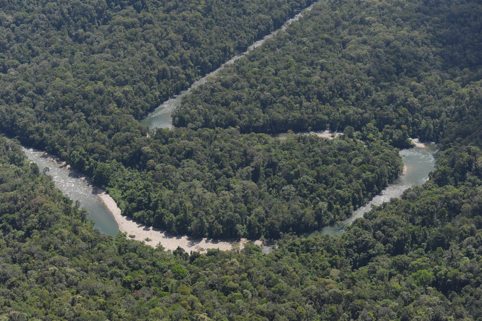 Northern New Guinea Lowland Rain and Freshwater Swamp Forests