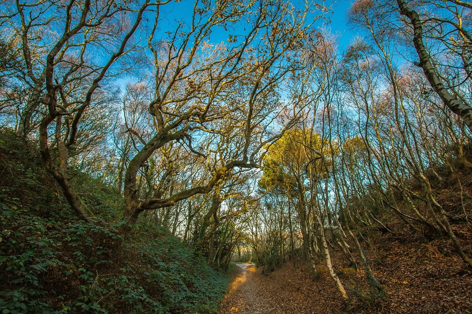 English Lowlands Beech Forests