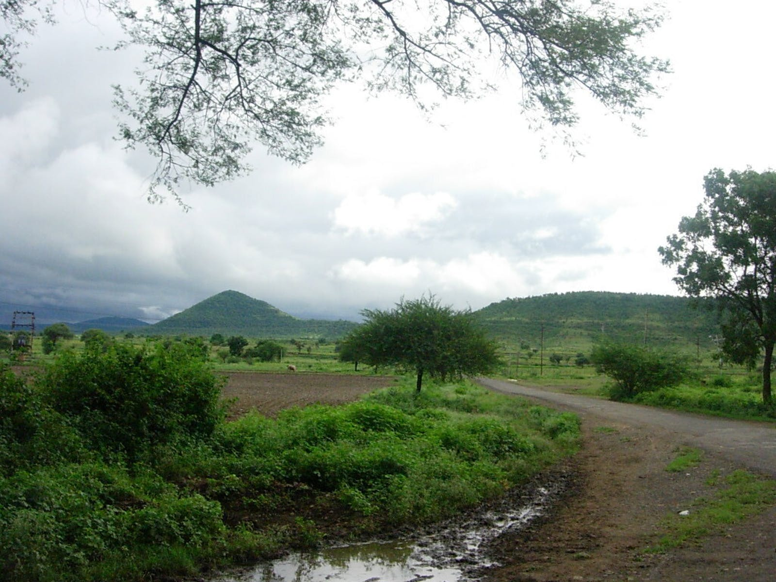 Narmada Valley Dry Deciduous Forests