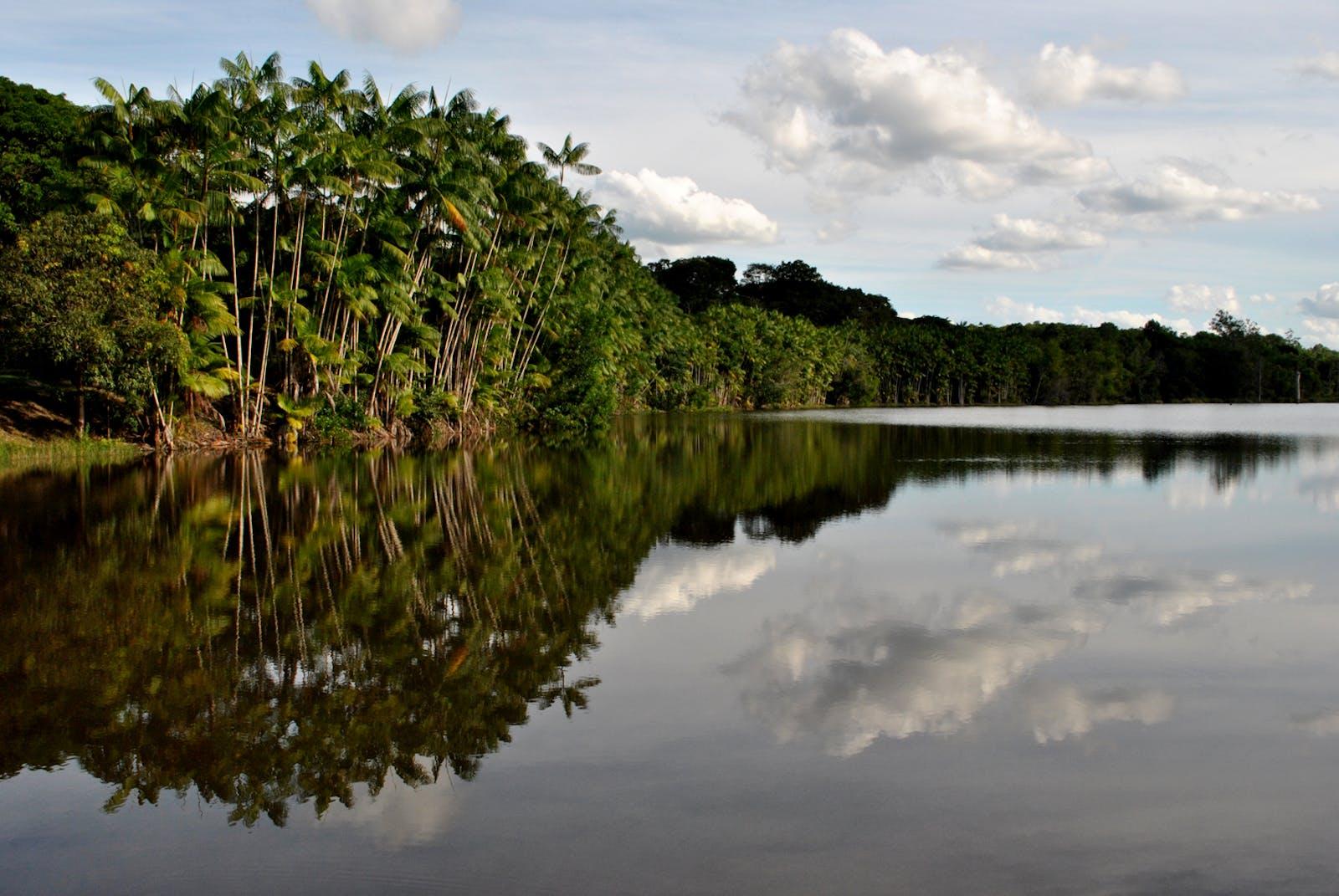 Bahia Coastal Forests
