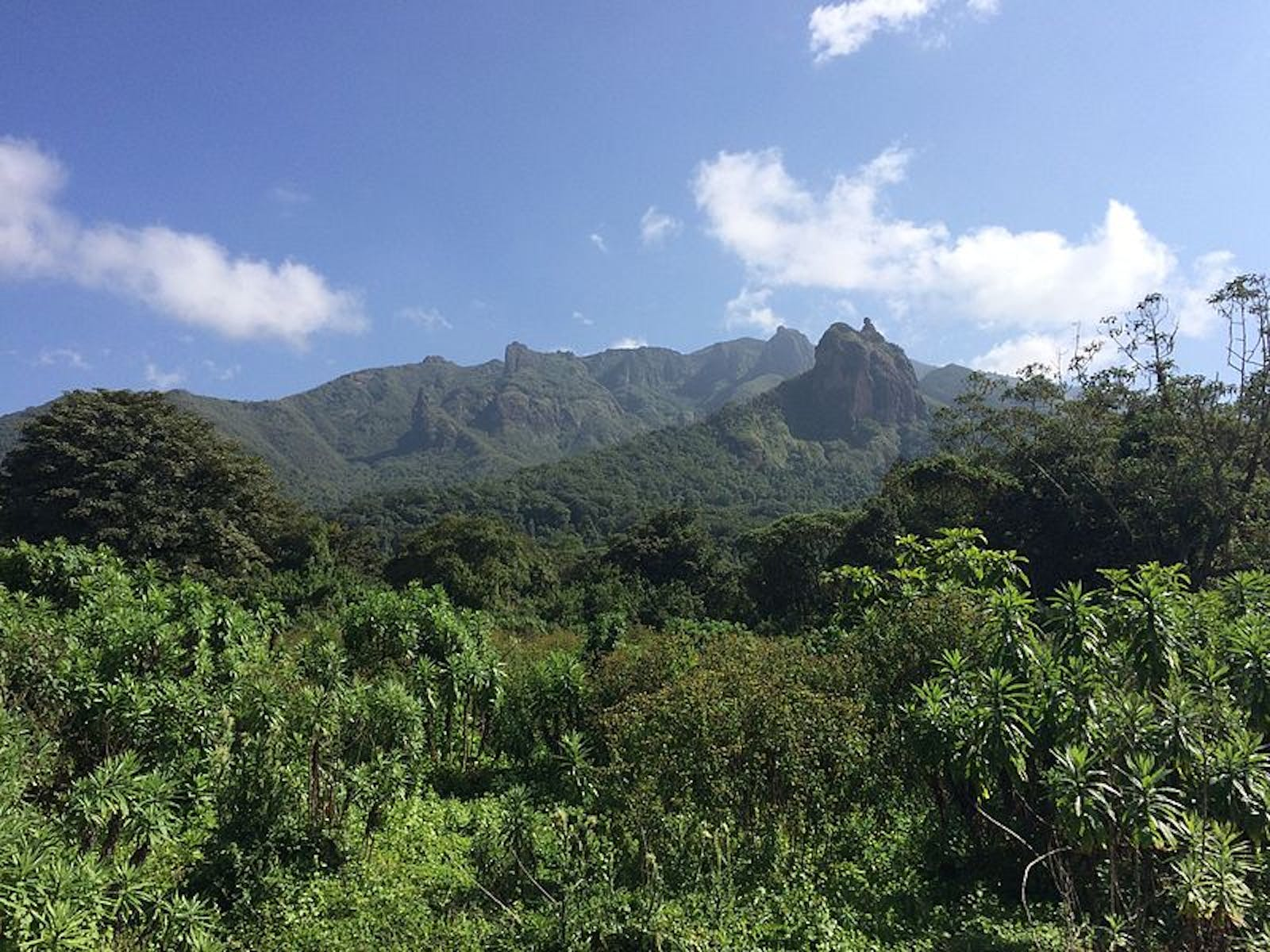 Ethiopian Montane Forests