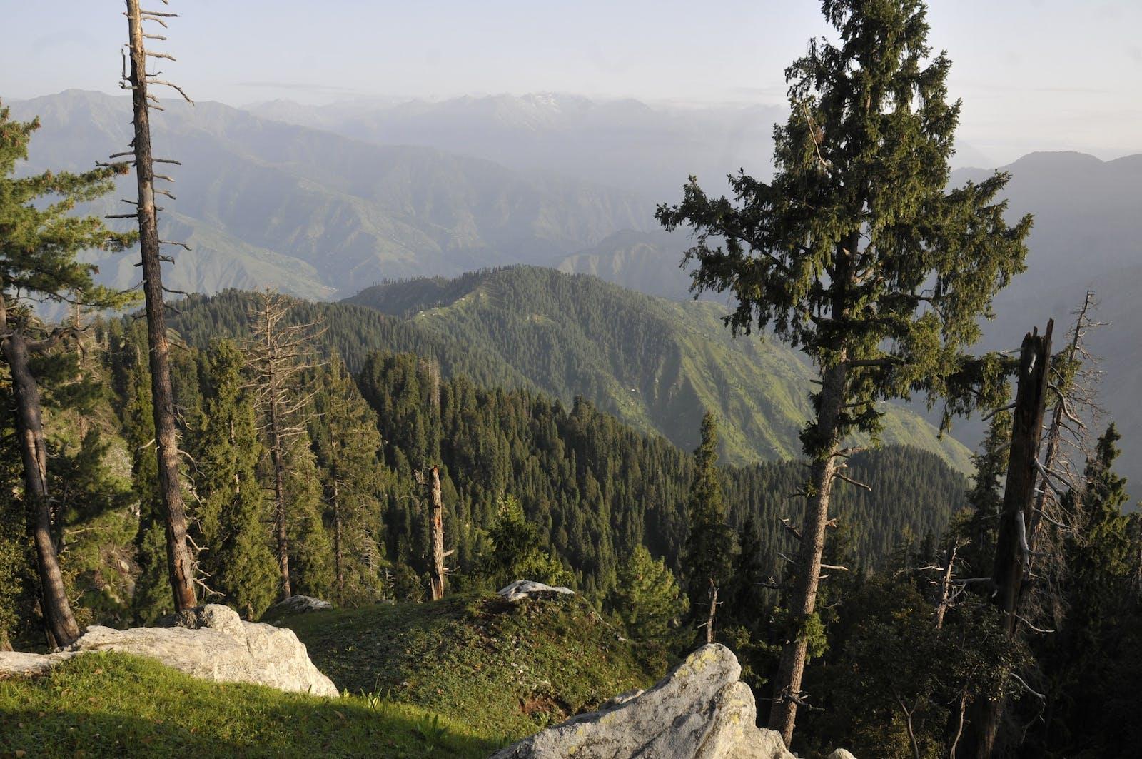 Baluchistan Xeric Woodlands