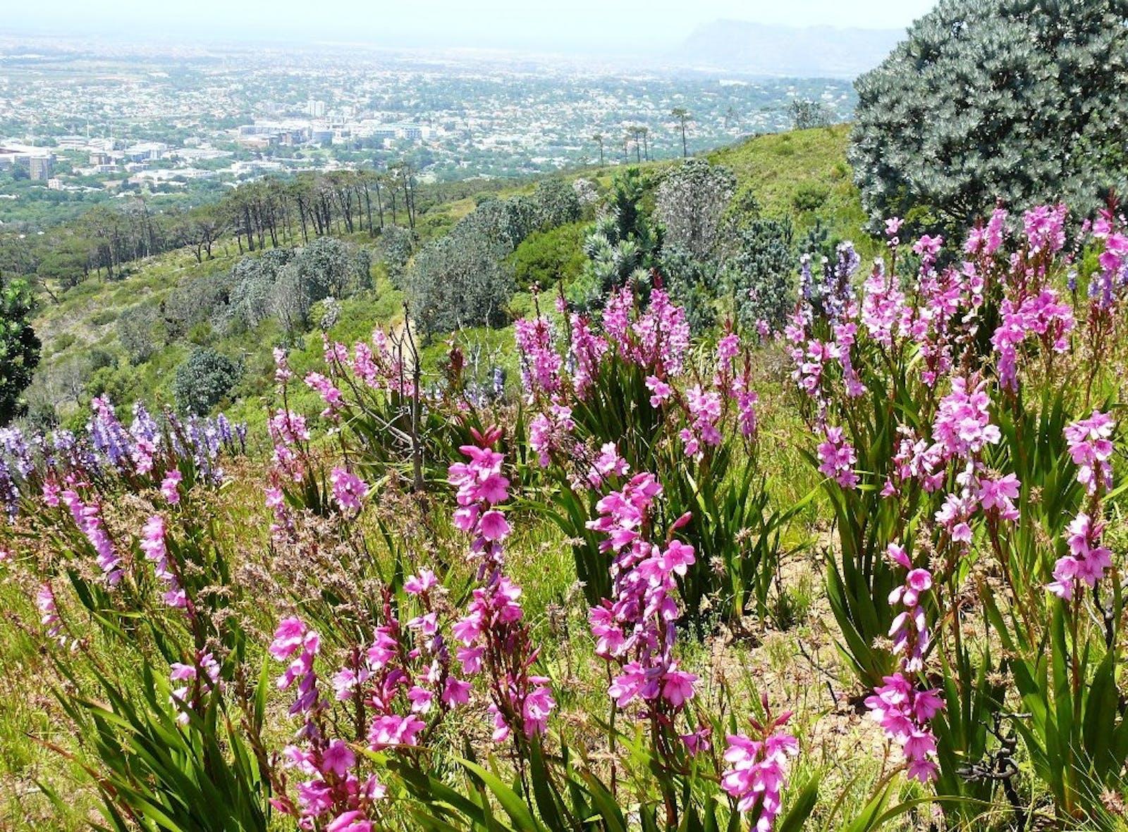 Fynbos Shrubland