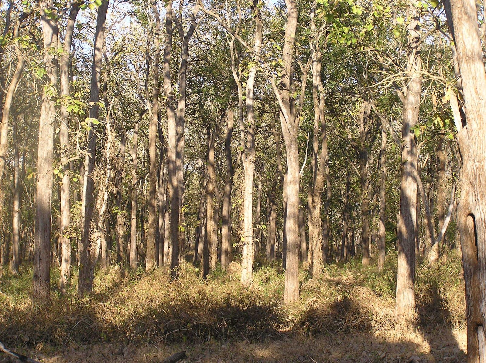 South Deccan Plateau Dry Deciduous Forests