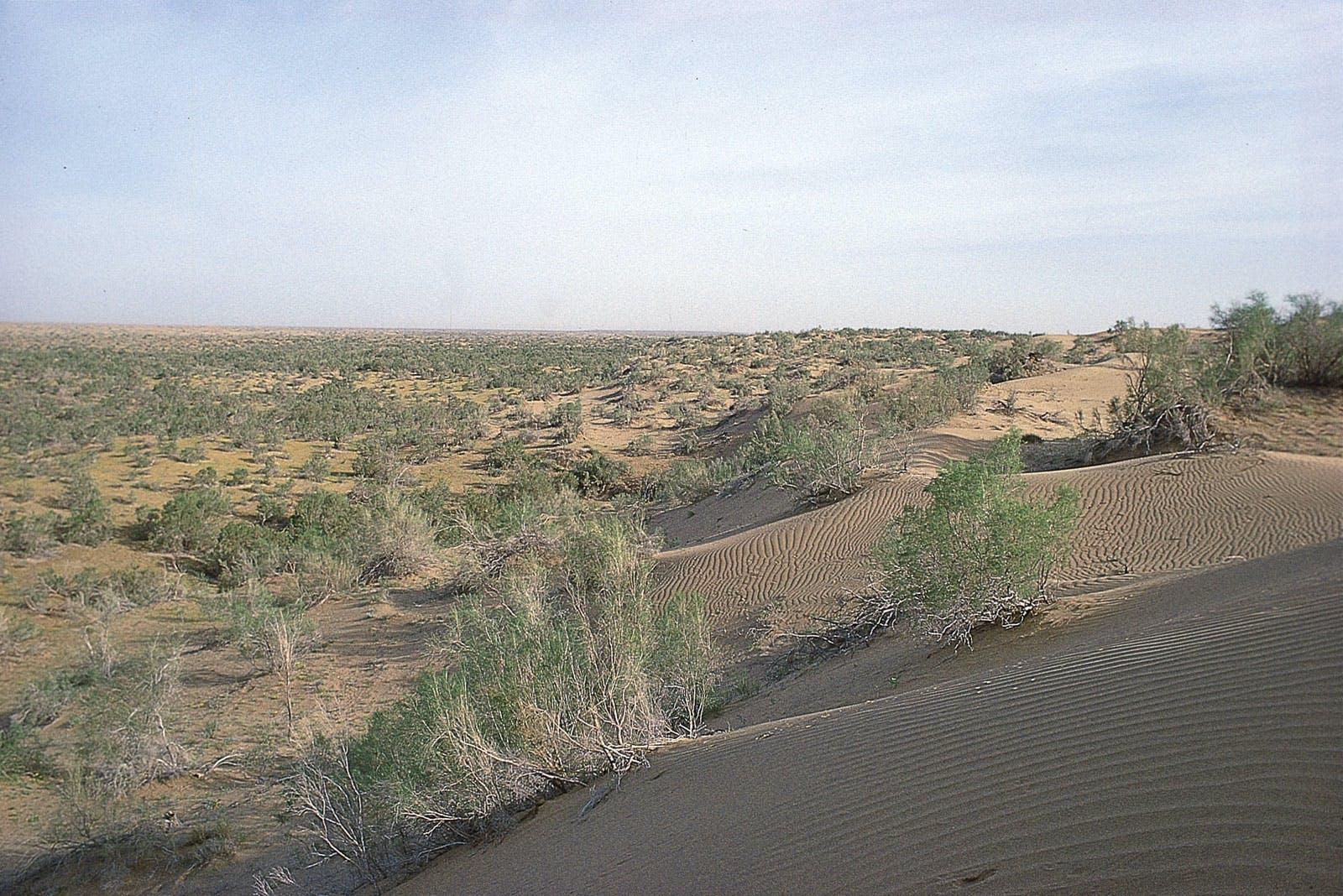 Central Asian Southern Desert
