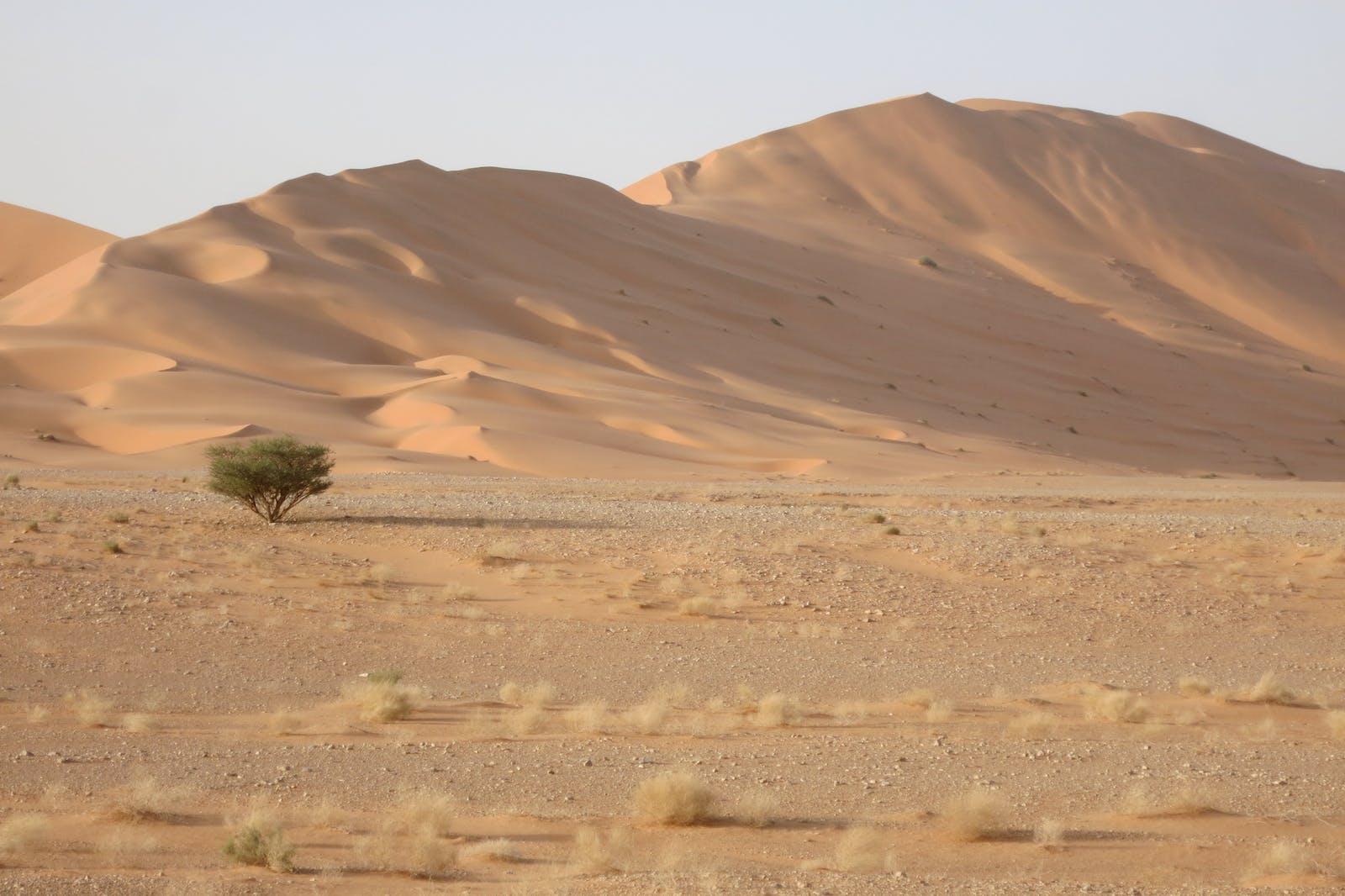 Arabian Sand Desert