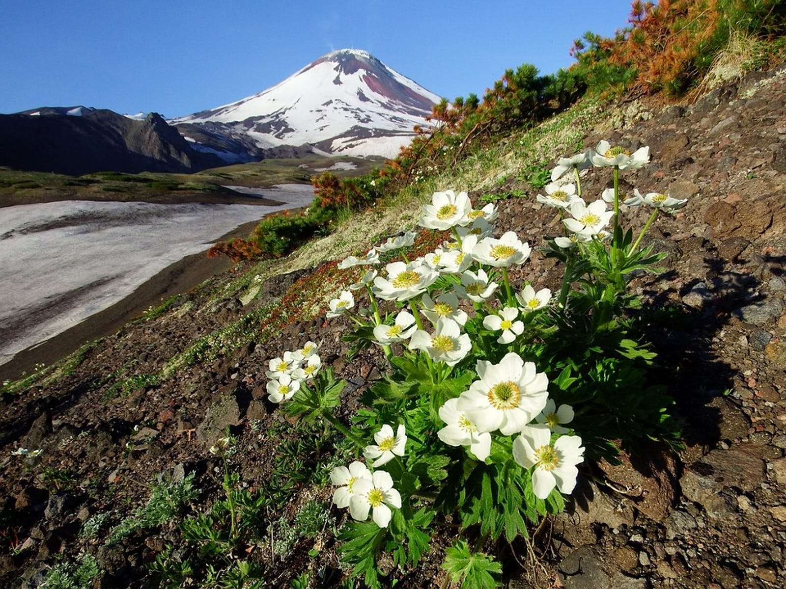 Kamchatka-Kurile Meadows and Sparse Forests