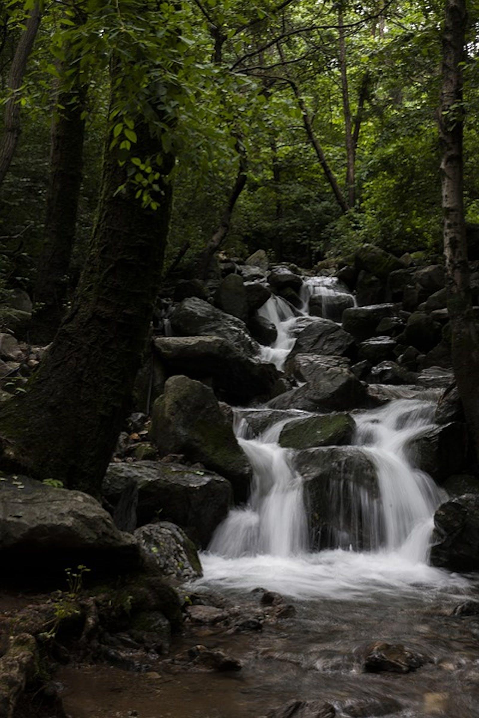 Central Korean Deciduous Forests