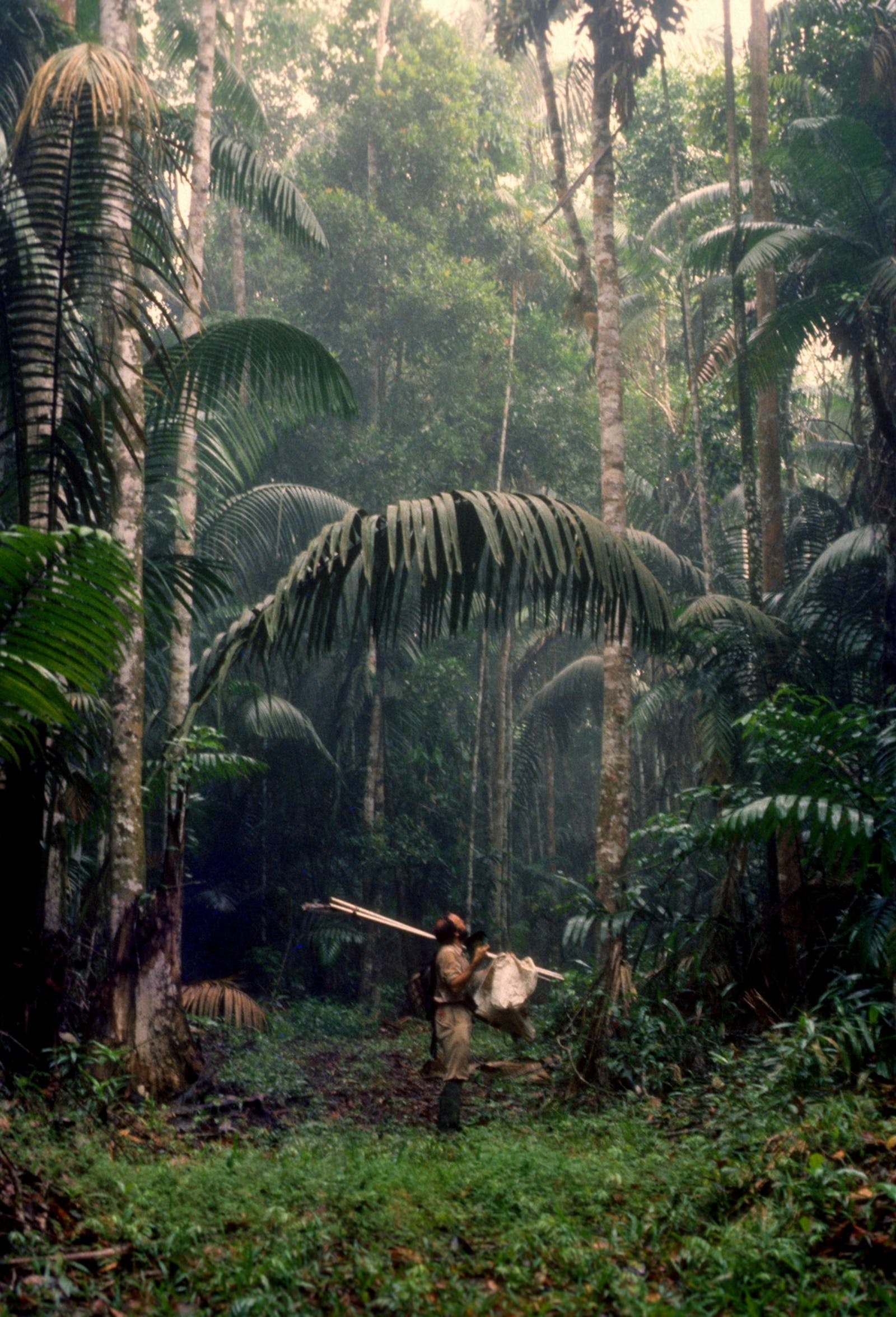Eastern Panamanian Montane Forests