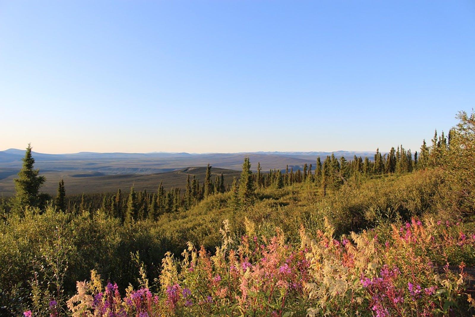 Ogilvie-Mackenzie Alpine Tundra