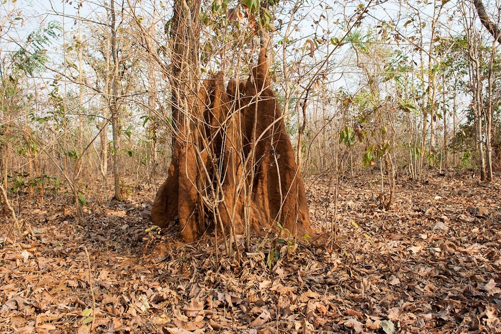 Aravalli West Thorn Scrub Forests