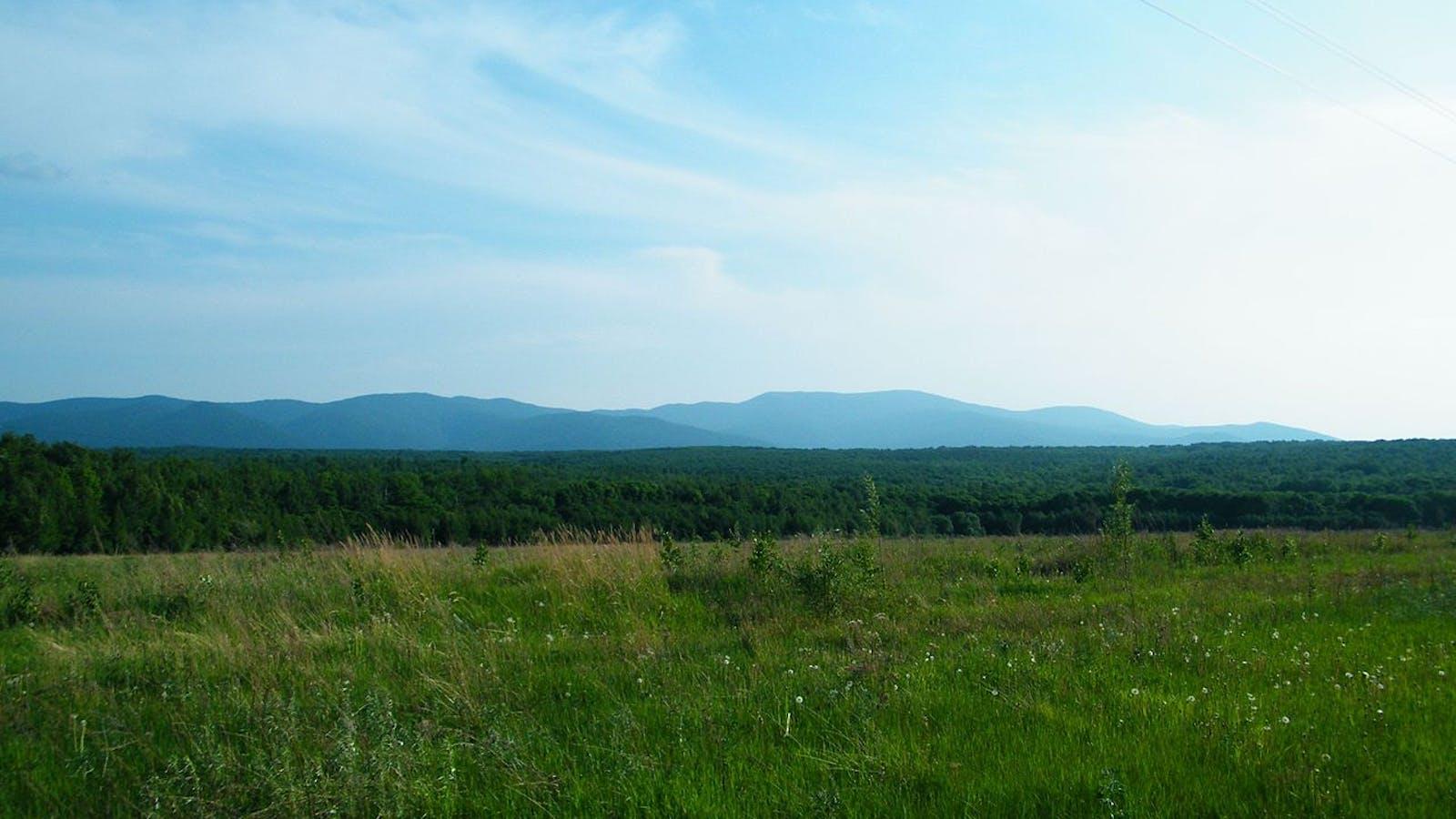 Amur Meadow Steppe