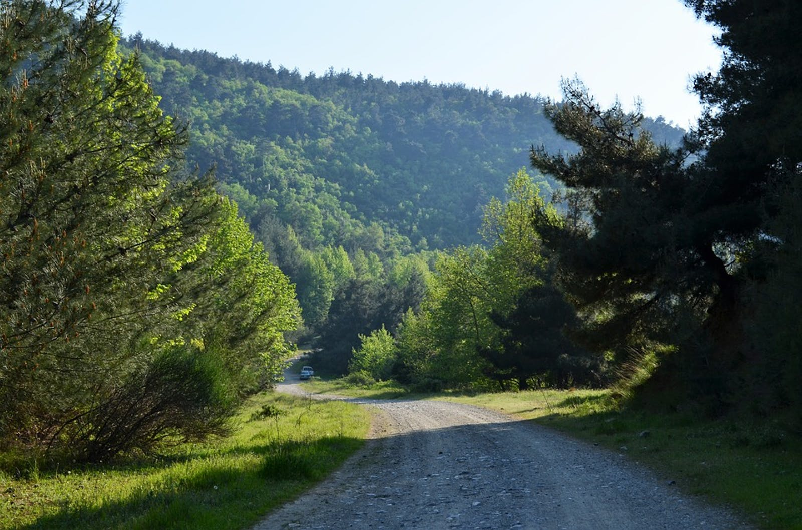 Anatolian Conifer and Deciduous Mixed Forests
