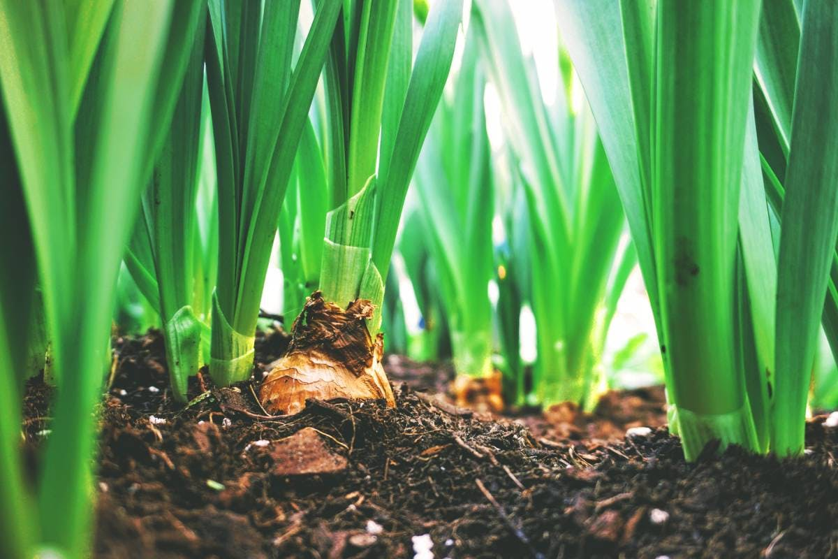 Regenerative Agriculture and Food Systems