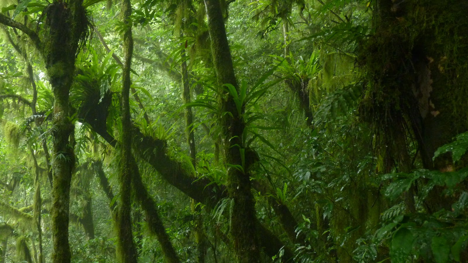 Comoros Forests