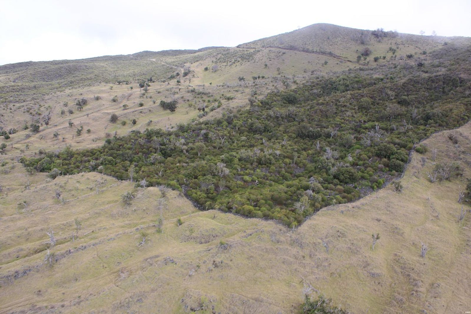 Hawai'I Tropical Dry Forests