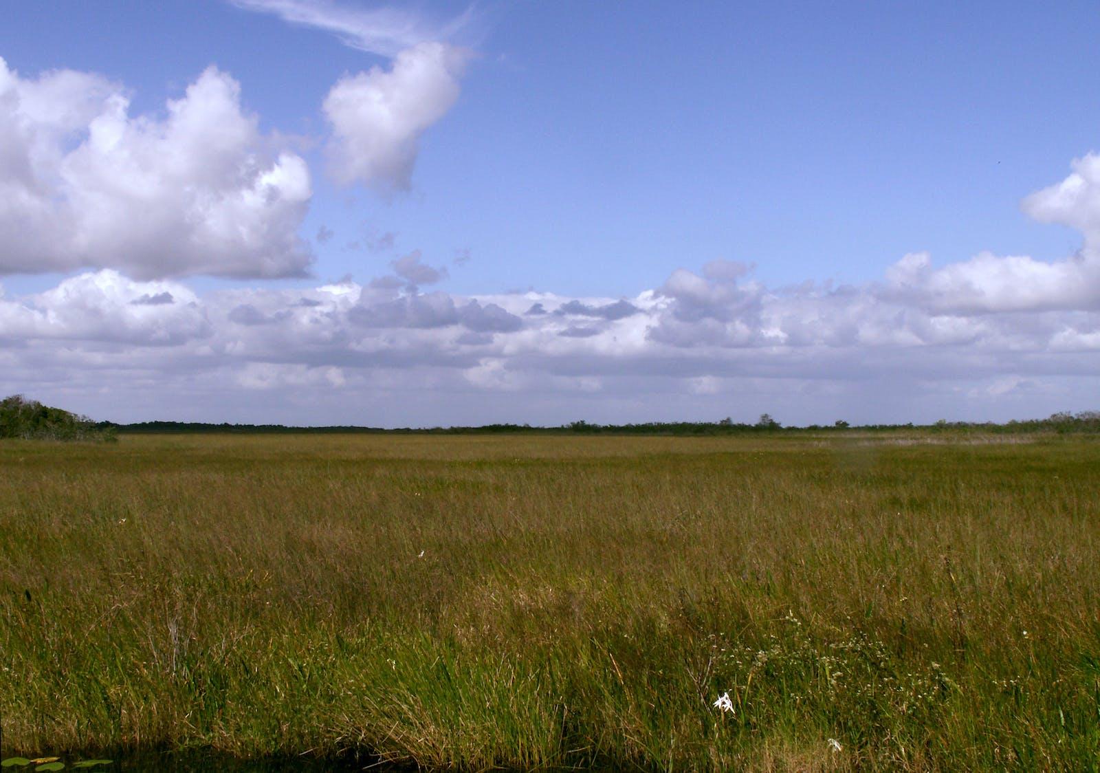 Everglades Flooded Grasslands