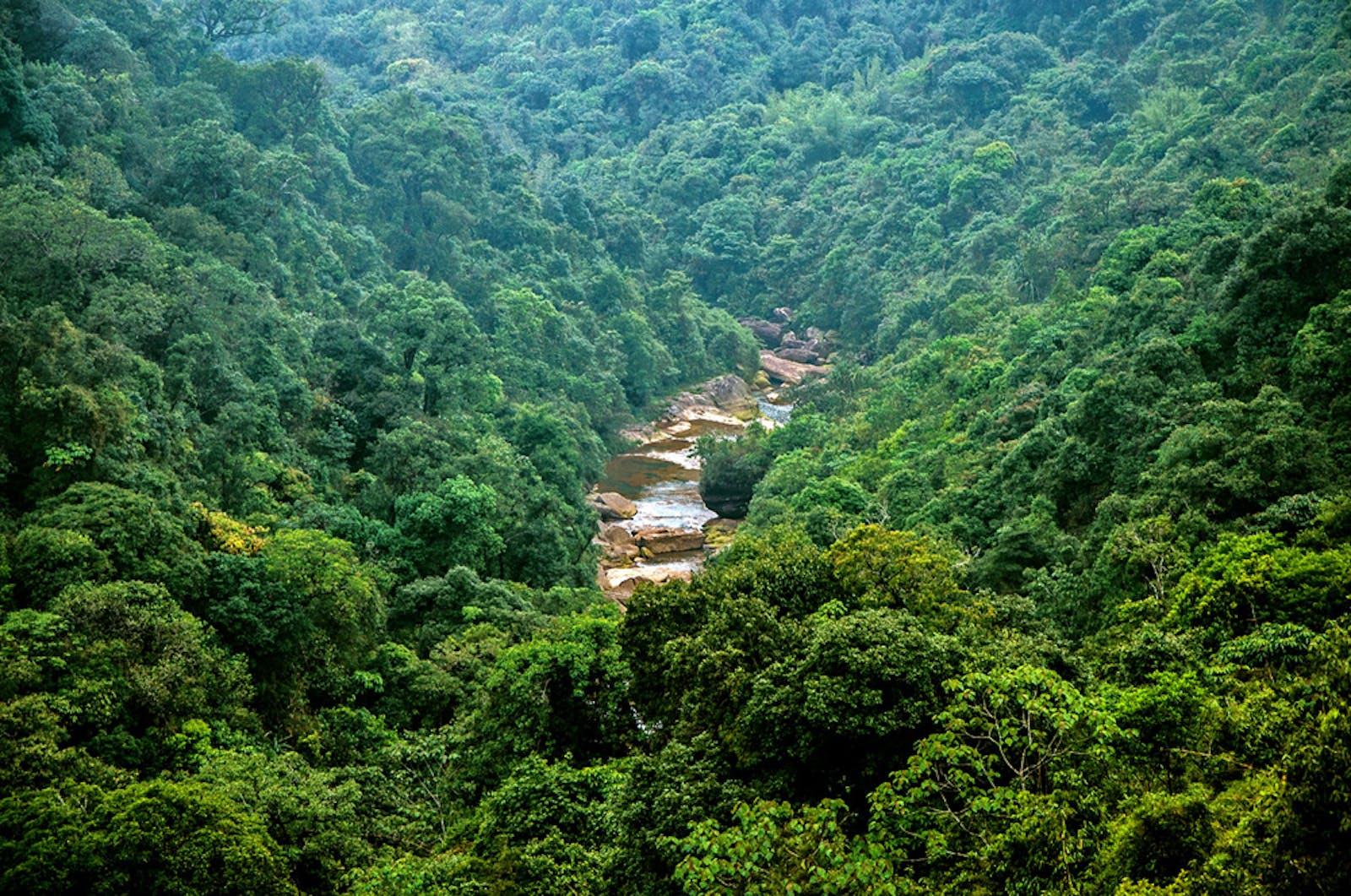 Meghalaya Subtropical Forests