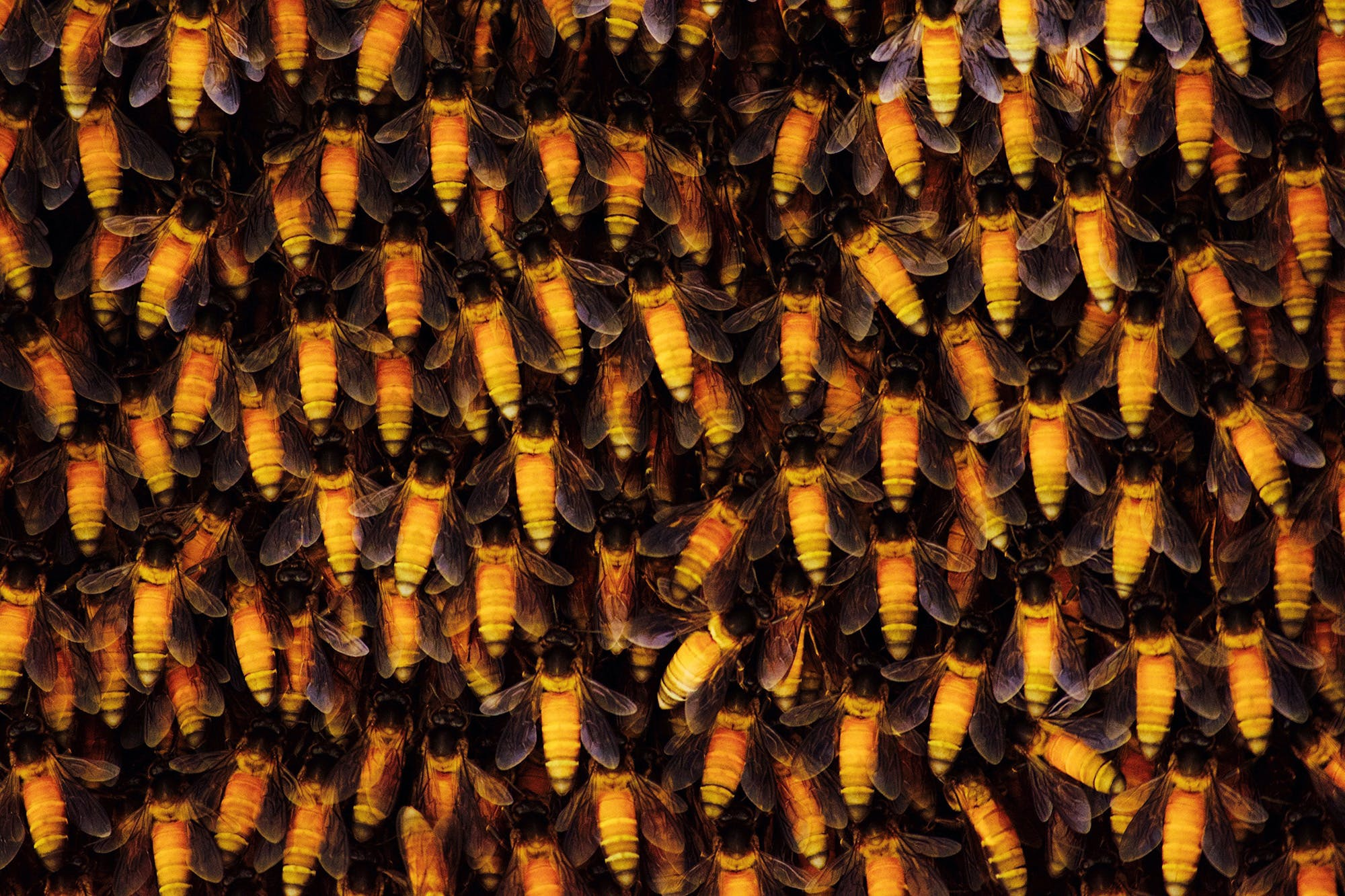 Bee populations across the world are falling due to human activities such as intensive agriculture, pesticide use, urbanization, and climate change.