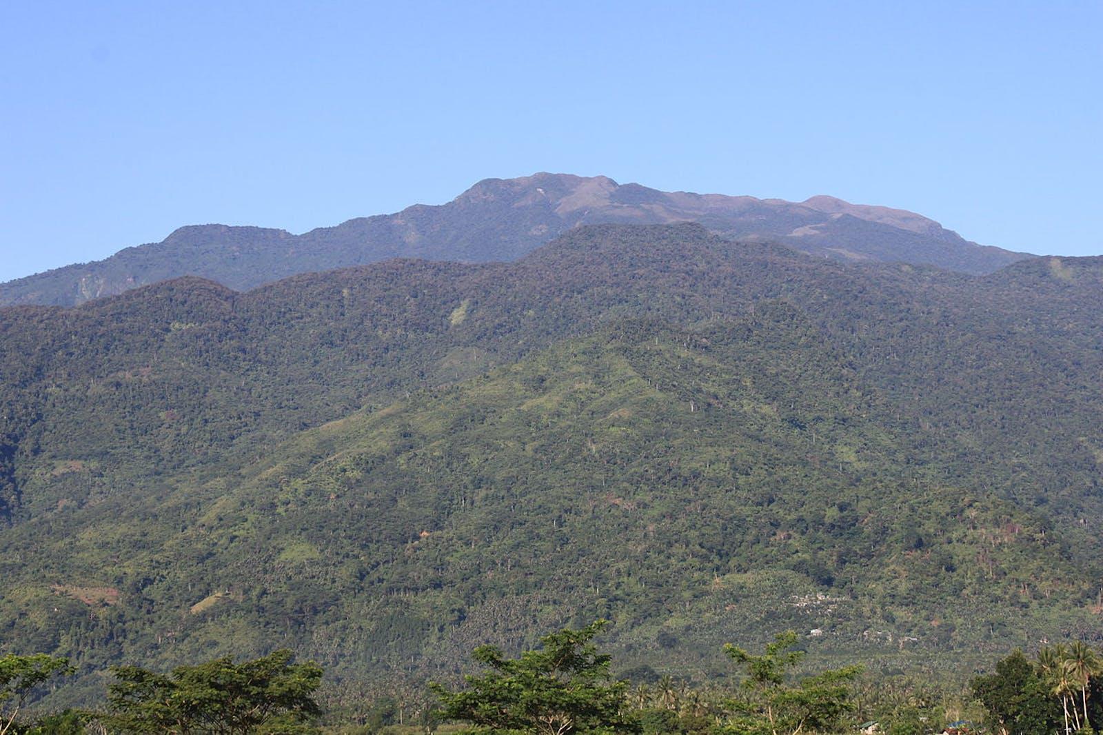 Mindoro Rainforests