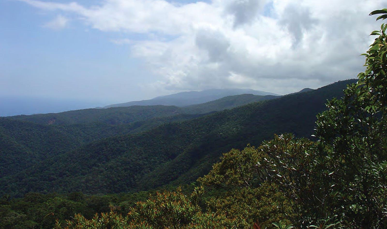 Luzon Montane Rainforests