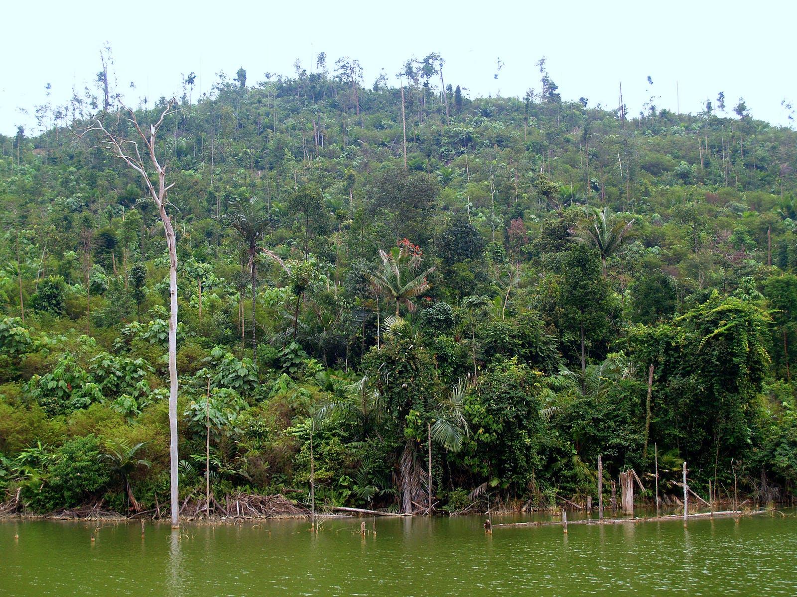 Western Java Rainforests