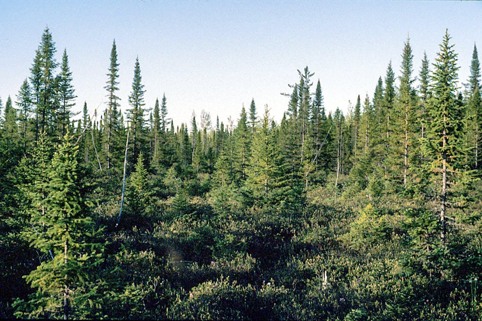 Southern Hudson Bay Taiga